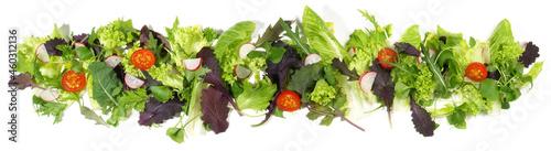Salat, Blattsalat Panorama  freigestellt - Hintergrund weiß
