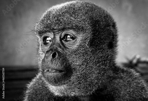 Fotografie, Obraz sin la selva
