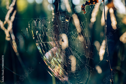 Fotografiet spider web with dew drops