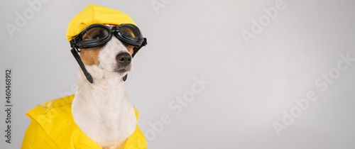 Fotografiet Portrait of jack russell terrier dog in life jacket with diving goggles and pool cap on white background