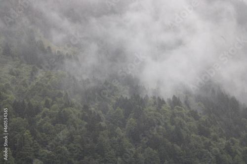 Fototapeta forêt sous l'orage