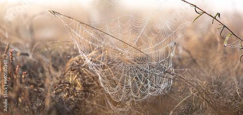 Fotografiet Big beautiful spider web in dew drops at dawn in the field.