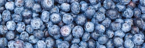 Wallpaper Mural Blueberries berries fruits blueberry berry bilberry bilberries fruit background