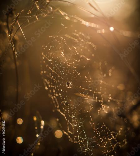 sieć, pająk, charakter, rosa, woda, kropla, makro, insekt, pajęczyna, pajęczyna, net, deseń, poranek, kropla, sieci, deszcz, tekstura, pułapka, jesienią, projekt, pajęczyna, bliska, pająk, jedwab, lat