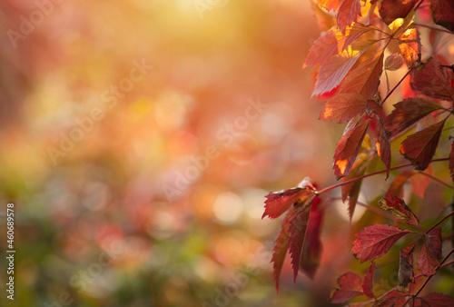 Jesienne liście z miejscem do wklejenia