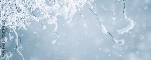 Obraz na plátně verschneite zweige vor abstraktem hintergrund