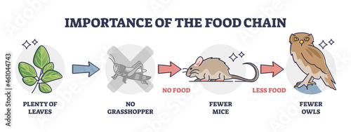 Importance of food chain as lack of animal nutrient situation outline diagram. Labeled educational consumer level species extinction because of insects deficiency vector illustration. Wildlife feeding
