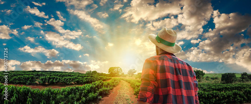 Fotografie, Obraz Farmer with hat in front of a coffee plantation crop, in a sunset day on farm