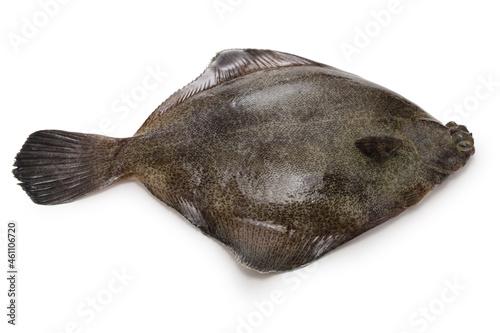 Obraz na plátně frog flounder isolated on white background