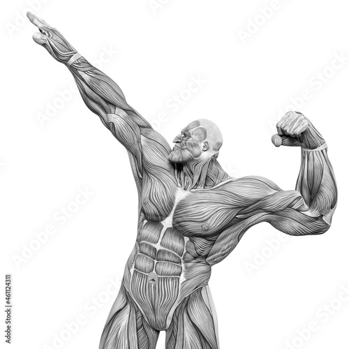 Photo bodybuilder muscle maps is the winner in white background