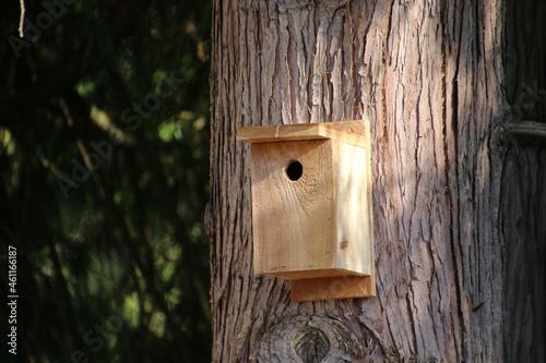 A new cedar birdhouse Fototapeta