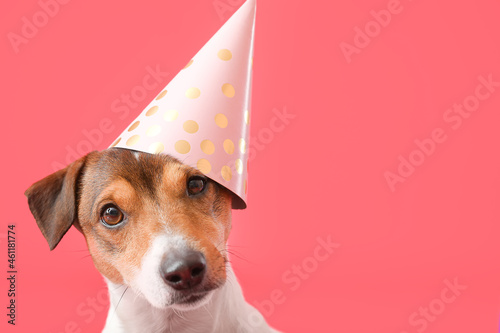 Fotografering Adorable dog in party hat on color background