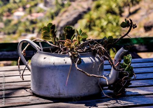 Canvas Strange Unusual Plant Pot