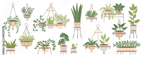 Fotografie, Obraz Set of plants in hanging pots and pots on stands. Home jungle