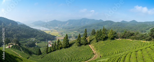 Obraz na plátně 언덕 위에서 내려다 본 보성 대한다원의 녹차밭 풍경