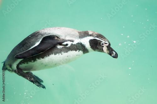 Slika na platnu penguin in zoo