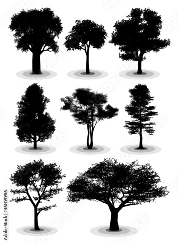 Foto Highly detailed vector silhouettes of trees from temperate regions
