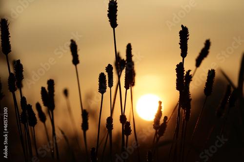 Widok na trawę oświetlaną promieniami wschodzącego słońca.
