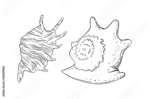 Spiral seashell and conch isolated in white background Fototapet