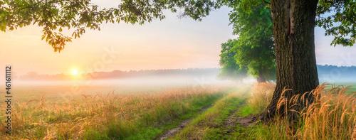 Fotografia Beautiful foggy morning at the old oaks avenue
