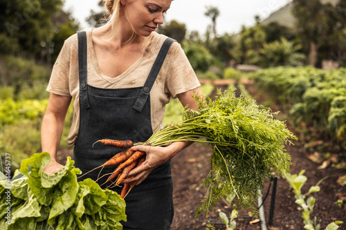 Fototapeta Young organic farmer holding freshly picked vegetables on her farm