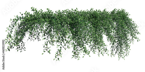 Tela Climbing plants creepers isolated on white background 3d illustration