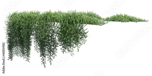 Wallpaper Mural Climbing plants creepers isolated on white background 3d illustration