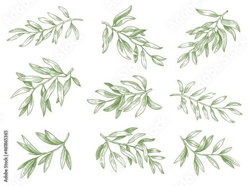 Fotografie, Obraz Olive branches