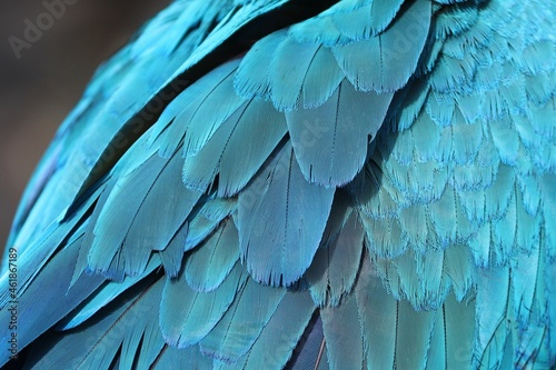 feathers Fototapet