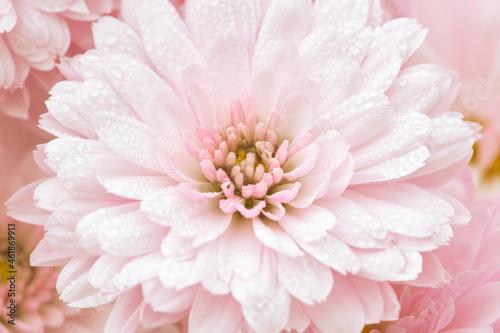 Slika na platnu Rosa Blumen in einem weichen Morgenlicht