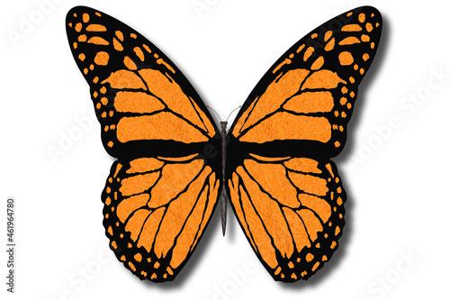 Fotografija Farfalla colorata vola con le ali aperte su sfondo bianco..