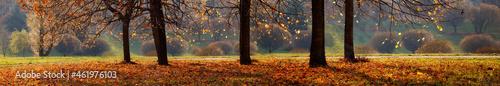 Beautiful Panoramic Autumn header