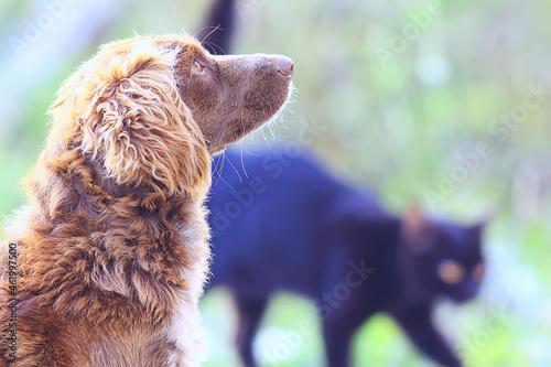 Photo stray dog on the street, chipping, sterilization animal shelter, portrait of mon
