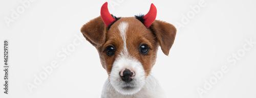 sweet jack russell terrier dog wearing devil horns