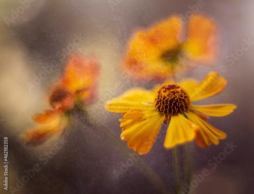 Dzielżany - jesienne kwiaty