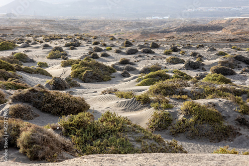 Canvastavla Landscape of a semi-desert with arid nature