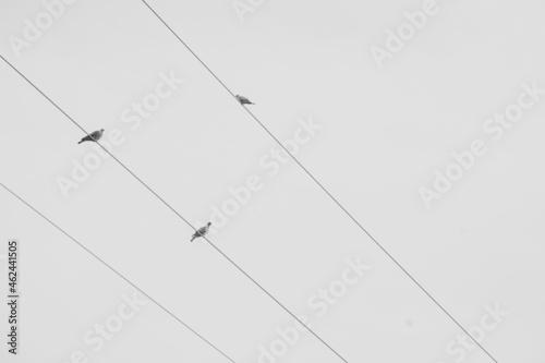 Foto Pájaros sobre cable eléctrico blanco y negro