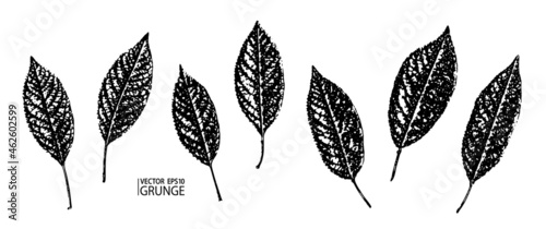 Foto Grunge leaves set
