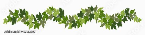 Foto Ivy festoon, green creeper decorative border isolated on white background