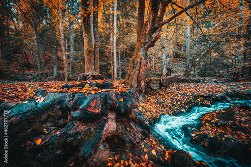 Canvastavla Beautiful autumn landscape in Bavarian forests with trees and colorful fallen le