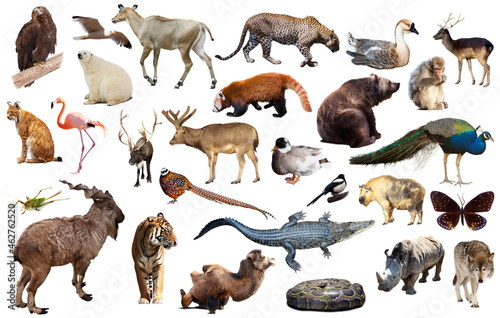 Billede på lærred Set of various asian isolated wild animals including birds, mammals, reptiles an