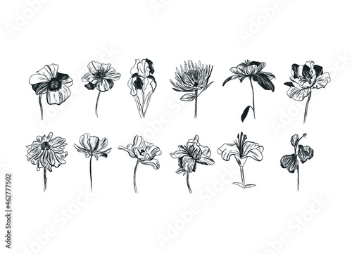 Wallpaper Mural Vintage graphic drawing of flowers