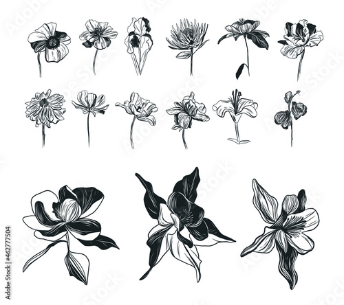 Photo Vintage graphic drawing of flowers