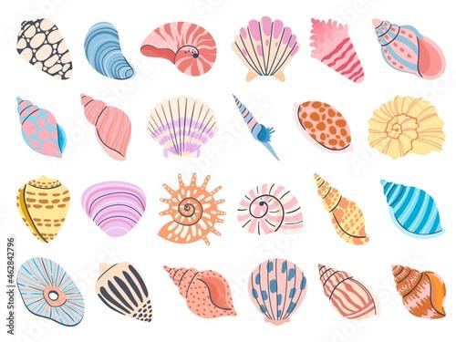 Fototapeta Tropical seashell