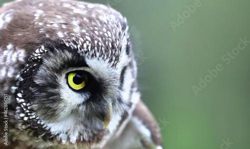 Fotografie, Obraz Bird of Minerva