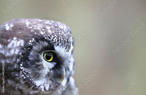 Fototapeta Bird of Minerva