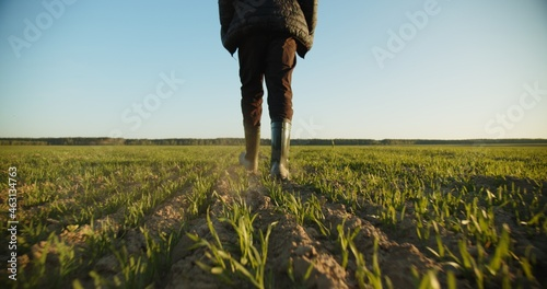 SLOW MOTION: Farmer walks through a young wheat green field. Bottom view of a man walking in rubber boots in a farmer's field, blue sky over horizon. Human walking on agriculture field
