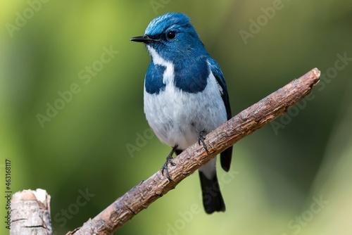 Fotografie, Obraz blue jay on a branch