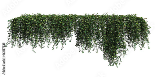 Murais de parede Climbing plants creepers isolated on white background 3d illustration
