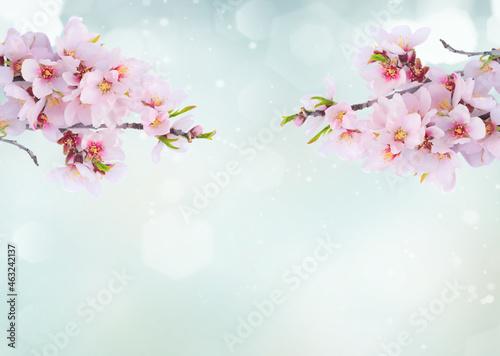 Fotografia almond tree bloom
